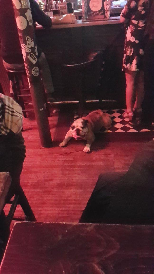 The Doghouse_Edinburgh_Dog