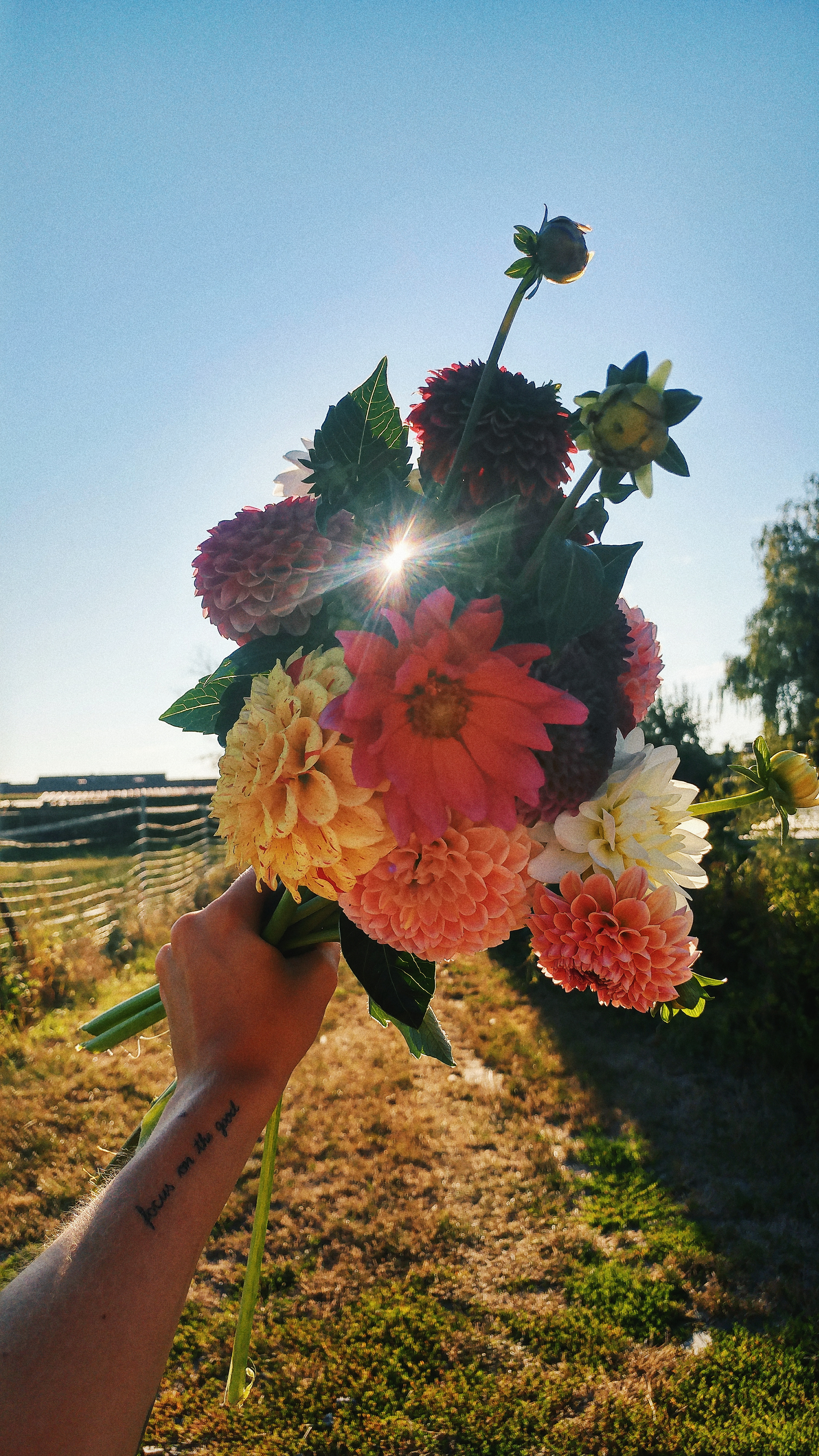 Blumen_Belohnung_motivieren