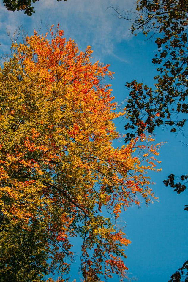 Heslacher_Wasserfälle_Baum
